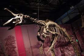 Tsintaosaurus, <b>Unicorn</b> No More