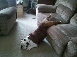 Image result for dog sleeps in