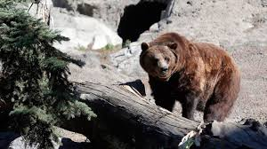 Image result for the calgary zoo