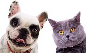 Resultado de imagen para imagenes de perros y gatos