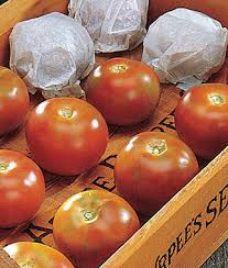 Burpees <b>Long-Keeper</b> Tomato Seeds and Plants, Vegetable ...
