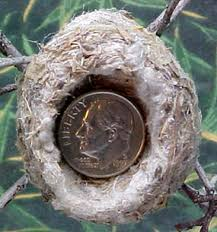 Hummingbirds  Articles and Watches on Pinterest