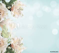 <b>White flowers</b> on light blue background with <b>green</b> leaves and bokeh ...