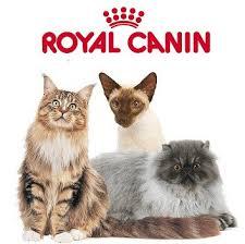 корм для кошек royal canin exigent 35 30 savoir sensation привередливых к вкусу сух 4кг