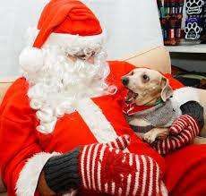 SPCA hosts howliday fun with <b>Santa</b> - RMOToday.com