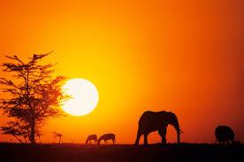 Resultado de imagen de africa paisajes