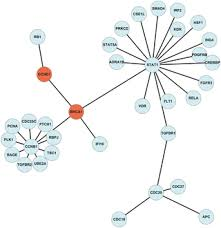 Integrative Gene Network Construction to Analyze Cancer ...