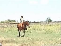 Horse Porn Videos / Longest / Page 5 / Zoo Tube 1
