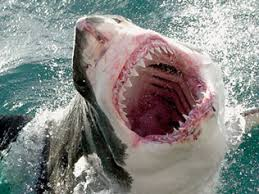 Image result for shark attack