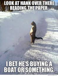 Envious Cat – Meme | WeKnowMemes via Relatably.com