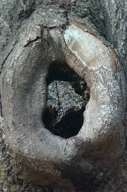 best images about knothole make believe birds this represents the tree that is by the radley house jem and scout kept finding lots of different things that were left for them in the hole