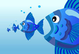 Resultado de imagen para peces comiendo