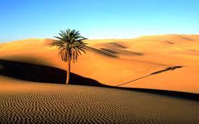 Image result for padang pasir senja