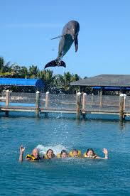 photo essay ocean world n republic turf to surf ocean world n republic dolphin jump