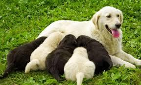 Resultado de imagem para cadelas