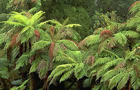 <b>fern</b> | Description, Features, Evolution, & Taxonomy | Britannica