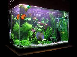 small freshwater office fish aquarium aquarium office