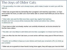 Older <b>Cats</b>