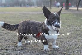 WEREWOLF MUZZLE,Smile <b>dog</b>,MUZZLE for <b>dogs</b>,DOBERMAN ...