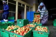 News Article: FAO launches the UN's International Year of <b>Fruits and</b> ...