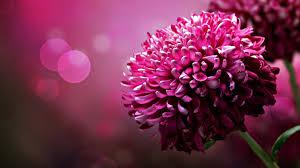 flower的圖片搜尋結果