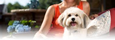 <b>Shih Tzu Dog</b> Breed - Facts and Personality Traits | Hill's Pet