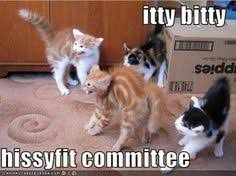 Crazy cats on Pinterest | Cat Memes, Funny Cat Memes and Cats via Relatably.com