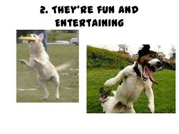 reasons why we should get a dog SlideShare They     re fun and Entertaining