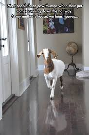 Goat+simulator+home+edition+goat+simulator+home+edition+http+geniusquotesnet+quotes+about+work_5c4bbe_5140123.jpg
