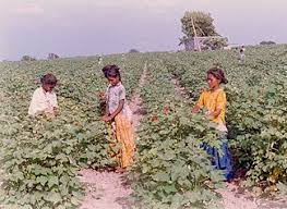 synthesis   pro child laborchild labor in india