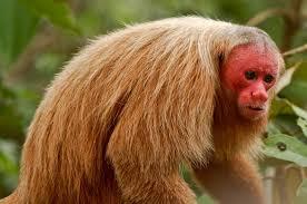 Image result for monkeys of the world