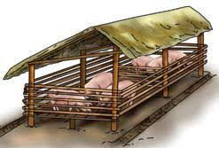 How to Farm Pigs   Housing   The Pig Site    Pregnant sows Pigsty Building