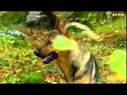 Девочка и <b>волк</b> / Mein Freund der Wolf (1999) фильм - YouTube