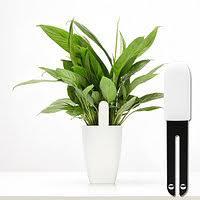 Умные <b>растения</b> в Несвиже. Сравнить цены, купить ...