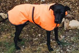 The Best <b>Winter</b> Jackets and Raincoats for <b>Dogs</b> for 2021 | Reviews ...