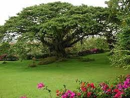 Resultado de imagen para reino vegetal