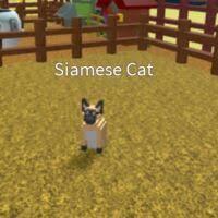 <b>Siamese Cat</b> | Creatures Tycoon Wiki | Fandom