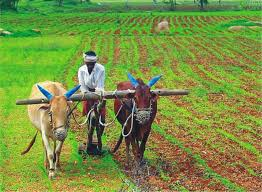 essay on the importance of agriculture in the n economy