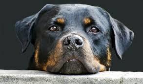 Afbeeldingsresultaat voor hondenbelasting