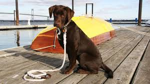 Dog leash on dock
