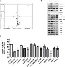 Anti-Tumor Effects of <b>Ganoderma</b> lucidum (<b>Reishi</b>) in Inflammatory ...