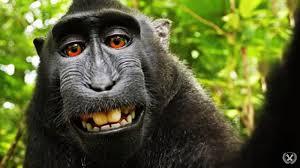 """Résultat de recherche d'images pour """"caricatures portable et singes"""""""