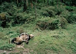 Image result for panda dead