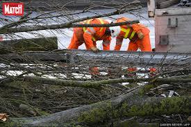 Alpes-Maritimes: une mère de famille tuée par la chute d'un arbre déraciné par le vent