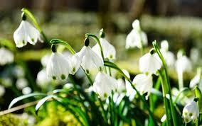 Znalezione obrazy dla zapytania wiosna kwiaty