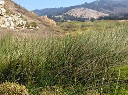 Image result for Pacifica, CA Quarry pictures