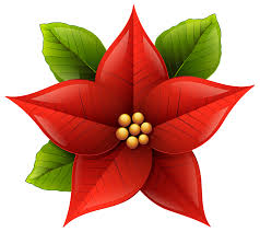 Free Christmas Poinsettia Png, Download Free Clip Art, Free Clip ...
