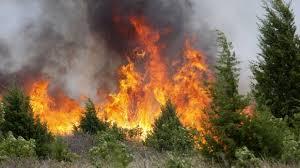 Resultado de imagen para fotos de incendios forestales