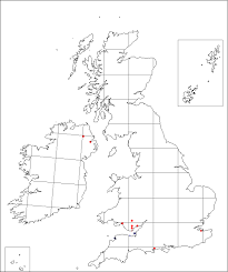 Scirpoides holoschoenus | Online Atlas of the British and Irish Flora