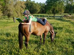Image result for horse in autumn
